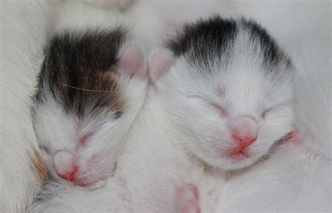 How To Care For Newborn Kittens – Project Pawsitivity