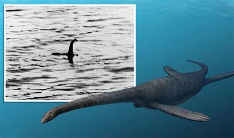 Loch Ness Monster discovery on the table as bookies cut